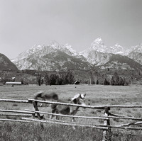 2447_B4P2_003_FM_SQ_BW_JACKSON_HOLE_GRAND_TETON_WYOMING_WY_USA_2002