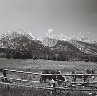 2447_B4P2_005_FM_SQ_BW_JACKSON_HOLE_GRAND_TETON_WYOMING_WY_USA_2002