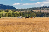 20160906_Grand_Tenton_National_Park_WY_9C7C0180